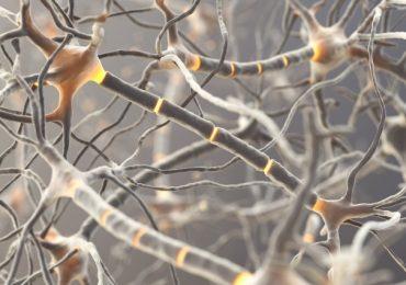 Chỉ số TFRC – Thẻ nhớ của não bộ