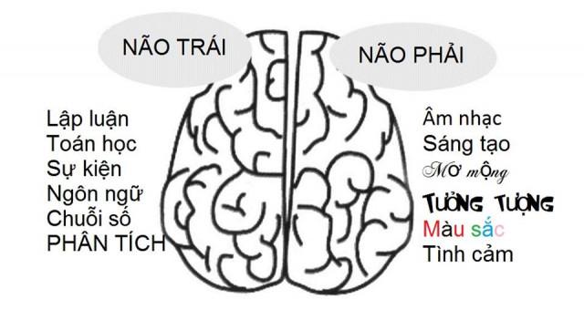 Hình ảnh minh họa các chức năng của 2 bán cầu não